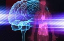 Conexión cuerpo-mente