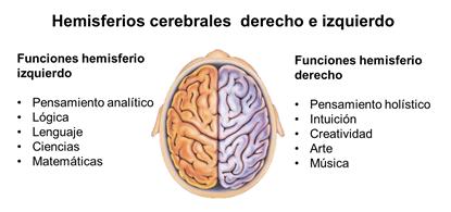 sincronizacion hemisferios cerebrales Las Rozas